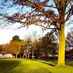 green park roundup 610